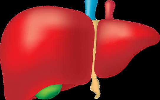 9 czynników szkodliwych dla wątroby oraz czy wątroba boli..?